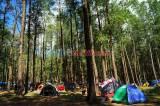 Kemping Akhir Pekan di Hutan Pinus Lembanna