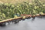 Ratusan Paus Pilot yang Terdampar di Pantai Pulau Tasmania Mati