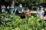 Peringati Hari Tani Nasional, Mentan Panen Sayuran Hidroponik