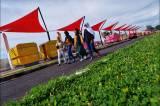 Walikota Makassar Danny Pomanto Hentikan Proyek Pedestrian Metro Tanjung Bunga.