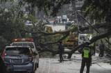 Pohon Tumbang di Jalan Akses UI Depok Timpa Sejumlah Kendaraan