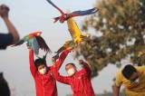 Penggemar Burung Free Flight Gelar Silaturahmi Antar Anggota