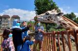 World Giraffe Day, Jerapah Baobab Safari Resort Taman Safari Prigen Dapat Hadiah Tumpeng Special