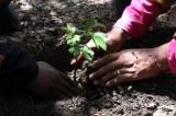 Komunitas Pecinta Alam Tanam Pohon Sapu Tangan