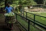 Bantuan Makanan Untuk Satwa Kebun Binatang Bandung