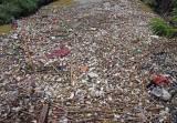 Sampah Menumpuk di Muara Sungai Cibanten