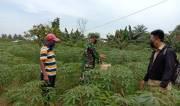 Dukung Ketahanan Pangan, Petani dan Penyuluh Deli Serdang Gunakan Pupuk Organik