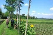 Petani dan Penyuluh Kostratani Jember Diajari Cara Mengendalikan Hama