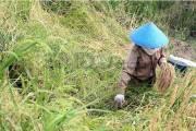 Pemerintah Daerah Harus Komitmen Hentikan Alih Fungsi Lahan Pertanian