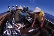 Demi Lindungi Nelayan: Si Kecil Bisa Menjauh, yang Besar Tak Boleh Mendekat