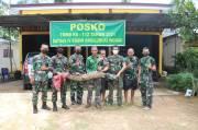 Masuk Rumah Warga, Buaya Sepanjang 2 Meter Ditangkap Prajurit TNI AD
