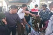 Sindikat Perdagangan Kulit Harimau di Riau Terungkap, 4 Pelaku Ditangkap Termasuk Wanita
