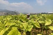 PD FSP RTMM Jawa Timur Fokus Melindungi Kepentingan Buruh dan Penolakan Cukai