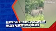 Sempat Menyerang, 2 Gajah Liar Masuk Perkebunan Warga