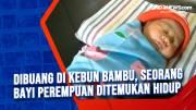 Dibuang di Kebun Bambu, Seorang Bayi Perempuan Ditemukan Hidup