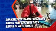 Dramatis, Penyelamatan Seekor Anjing yang Terseret Arus Banjir di Wajo Sulsel