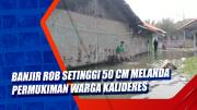 Banjir Rob Setinggi 50 Cm Melanda Permukiman Warga Kalideres