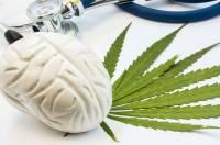 Otak Manusia Ternyata Produksi Bahan Kimia Sejenis Ganja
