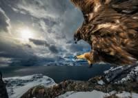 Wildlife Photographer, Menjaga Alam lewat Jepretan Kamera