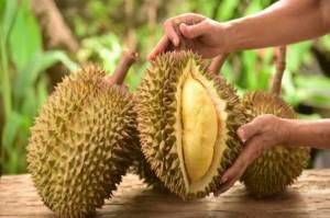 Disukai hingga Penjuru Dunia, Durian RI Bisa Jadi Andalan Ekspor