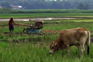 Terungkap! Kesuburan Tanah di RI Hanya Tersisa 60 Tahun Lagi