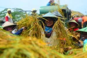 Kena PHK Imbas Covid-19, Banyak Orang Kota Pulang Kampung Jadi Petani
