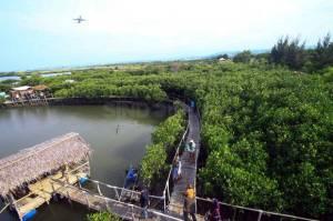 Mitigasi Tsunami di Selatan Jawa, BNPB: Ekosistem Garis Pantai Sangat Penting
