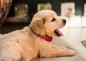 Ancam Nembakin Anjing Tetangga, Bos Perusahaan Ini Dipolisikan