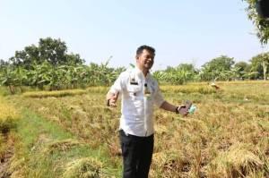 Petani Demak Bisa Manfaatkan Asuransi untuk Hindari Kerugian