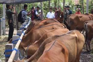 Kurangi Resiko Kematian Ternak, Kementan Bantu Asuransi Peternak di Pekanbaru