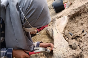Tim ITB Temukan Indikasi Keberadaan Fosil Hewan Purba di Waduk Saguling