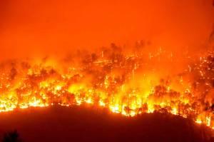 Angin Kencang Sebabkan Kebakaran Hutan Nasional Sequoia di California Meluas