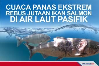 Cuaca Panas Ekstrem Rebus Jutaan Ikan Salmon di Air laut pasifik