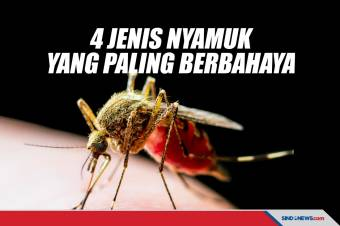 Hari Nyamuk Sedunia, Ini 4 Jenis Nyamuk Paling Berbahaya