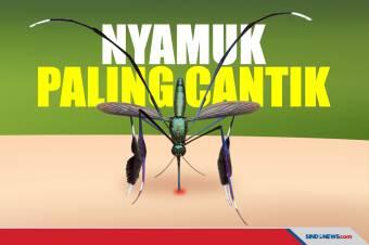 Tubuhnya Berkilau, Ini Nyamuk Paling Cantik di Dunia