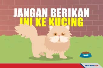 Kenali 7 Makanan yang Bisa Membuat Kucing Keracunan