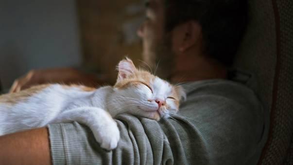 4 Penyakit yang Sering Diderita Kucing di Indonesia dan Cara Mencegahnya