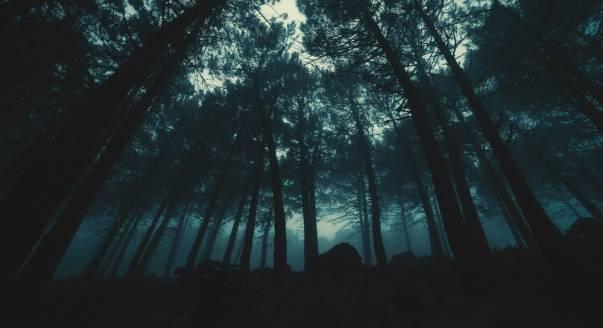 Mitos 6 Tumbuhan Pengusir Hantu, Kamu Pernah Coba?