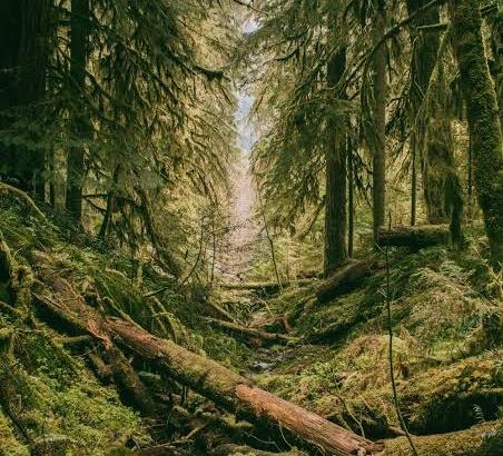 5 Hutan yang Diyakini Menyeramkan di Indonesia, Berani Coba?