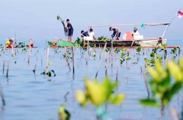 Hutan Mangrove Terakhir di Makassar Dirusak, Aktivis Lingkungan Berang