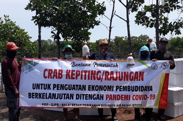 KKP Distribusikan Bantuan Benih Kepiting di Jawa Tengah