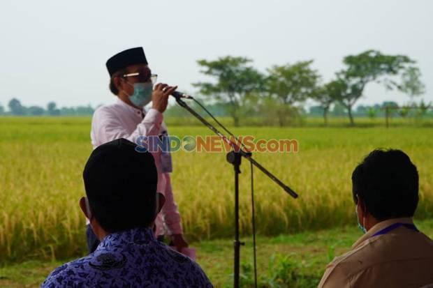 Bangun Ketahanan Pangan, FKDB dan Mabes Polri, Asstafsus Wapres Panen Raya di Cirebon