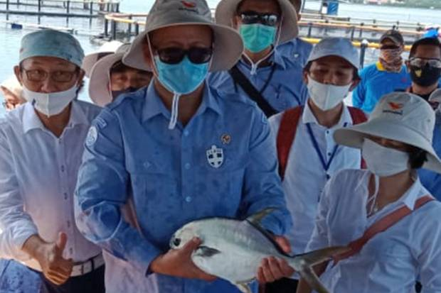 Di Tengah Pandemi Covid-19, Penjualan Ikan Meningkat