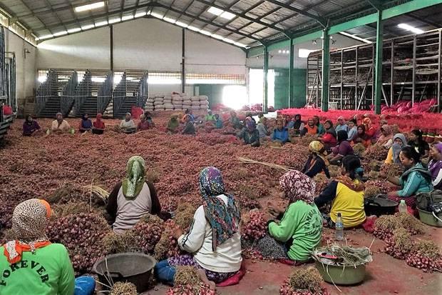 Stok Bawang Merah Dijamin Aman, Kementan Kawal Distribusi