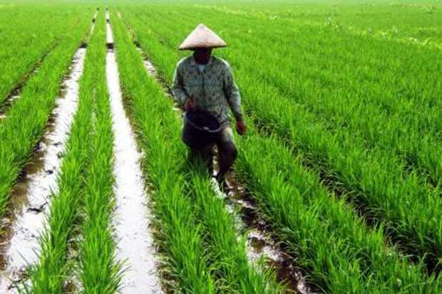 Kinerja Sektor Pertanian Tetap Cemerlang di Masa Pandemi