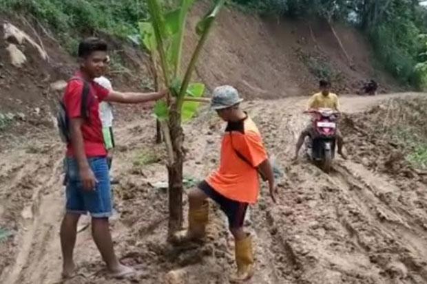 Tak Kunjung Diperbaiki, Warga Labatu Tanam Pohon Pisang di Jalan