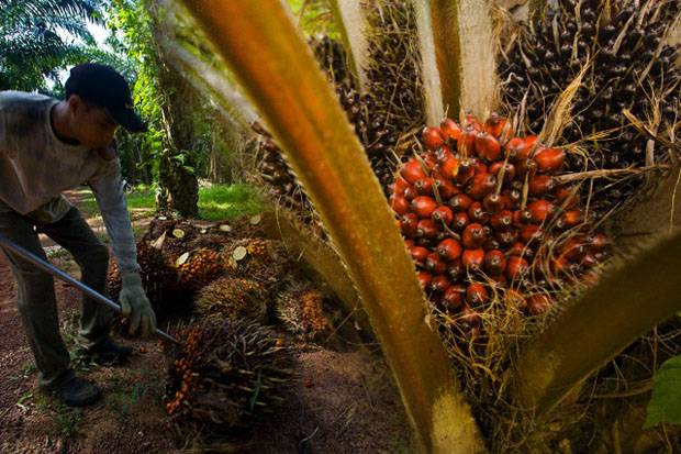Kemendag Dorong Ekspor Produk Biomassa ke Negeri Sakura