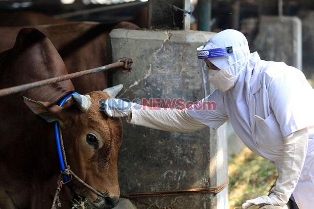 Kemenkes Sarankan Pemotongan Hewan Kurban Tidak Dilaksanakan di Masjid