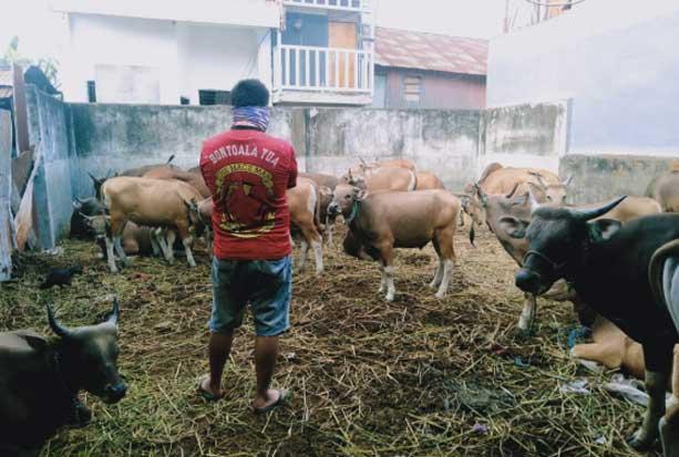 Ragam Cara Kelompok Suporter PSM Makassar dalam Berbagi Kurban