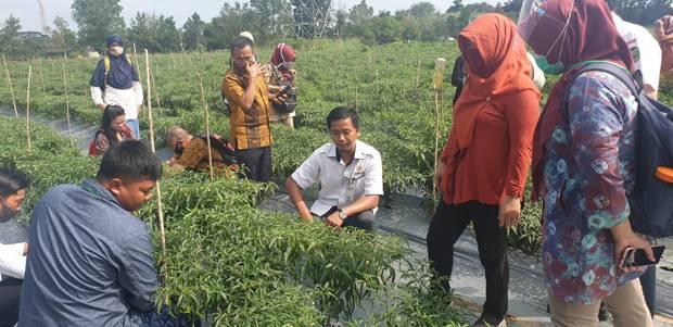 Banyuasin Dukung High Value Crop pada Pertanian CSA SIMURP